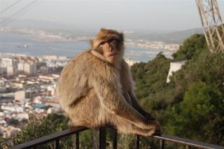 Äffchen im sonnigen Gibraltar
